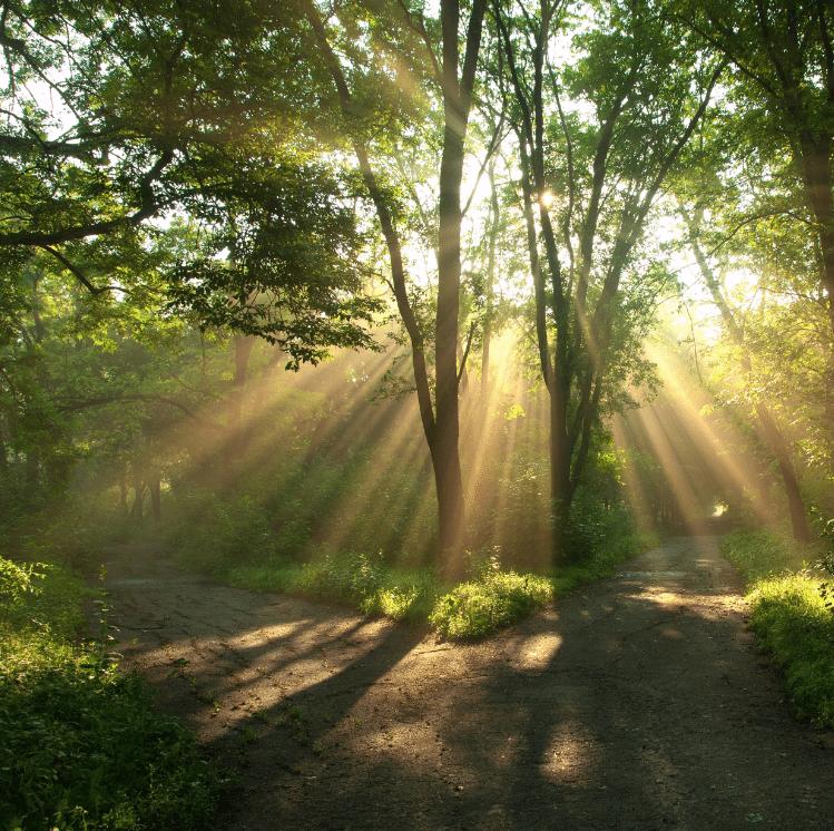 Como entrar no jardim do Éden?  Bispo Júlio Freitas  Blog Oficial